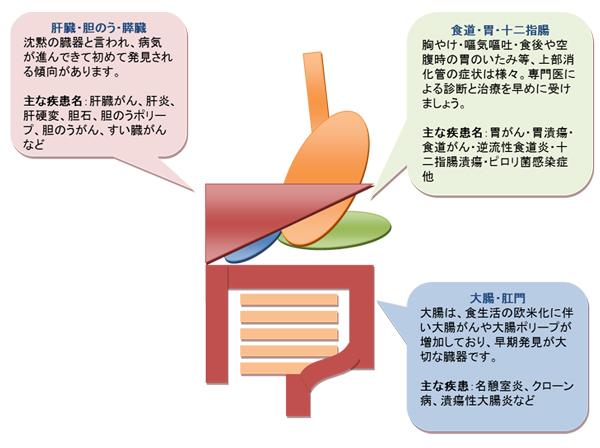 digestive_img001